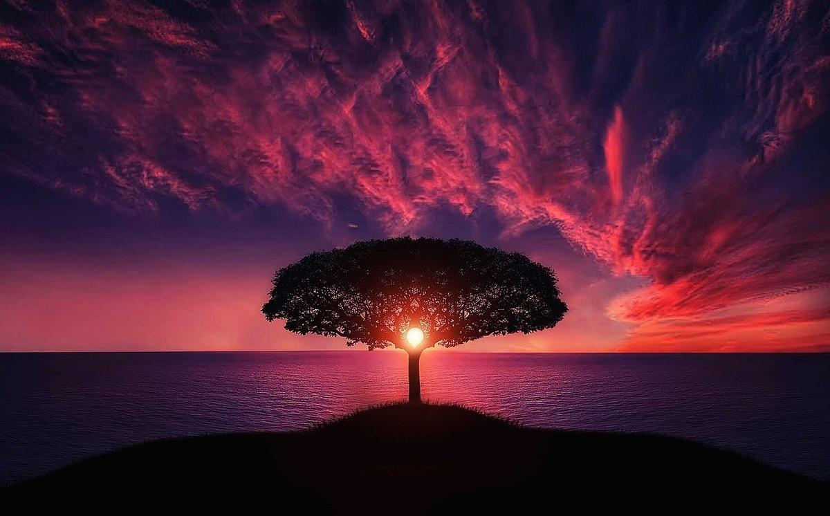 大きな木の背景に夕日
