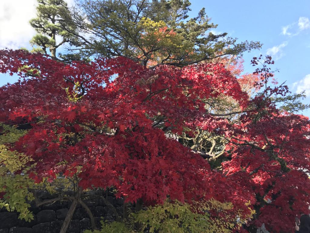 日光紅葉1