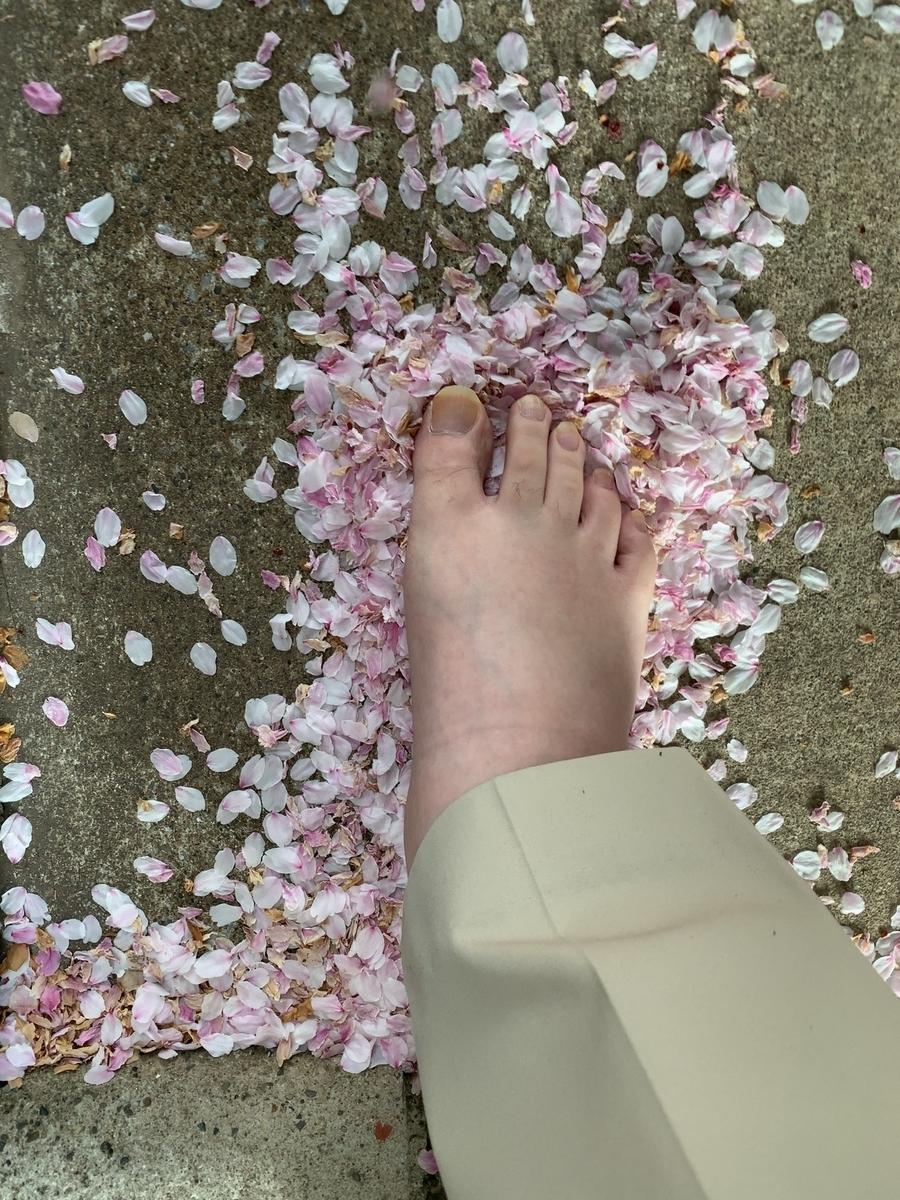 裸足で桜の花びらを踏む