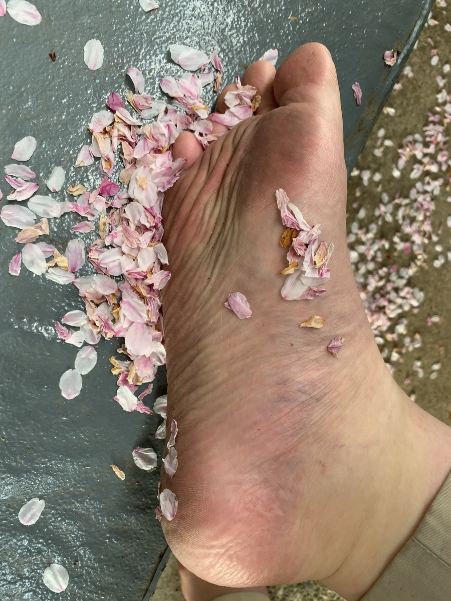 桜の花びらと足裏