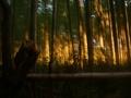 早朝の嵯峨嵐山