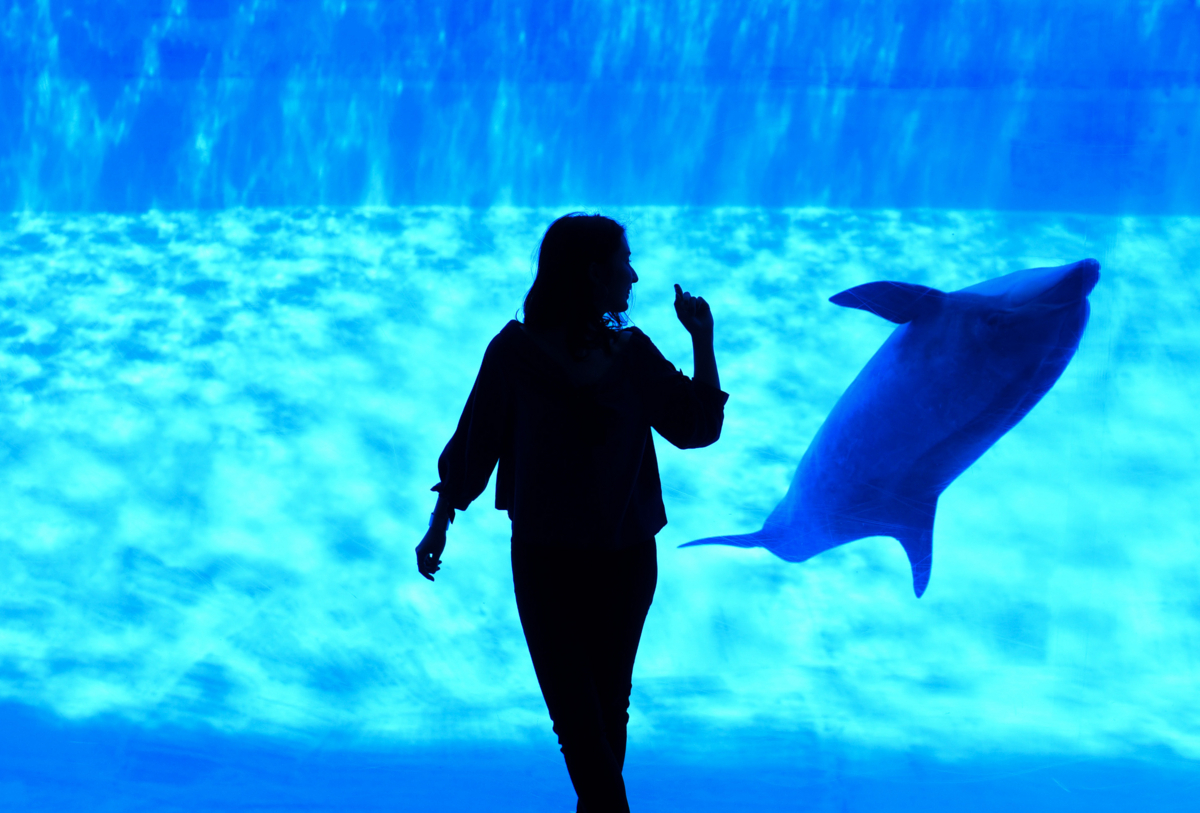 Dancing With Dolphin