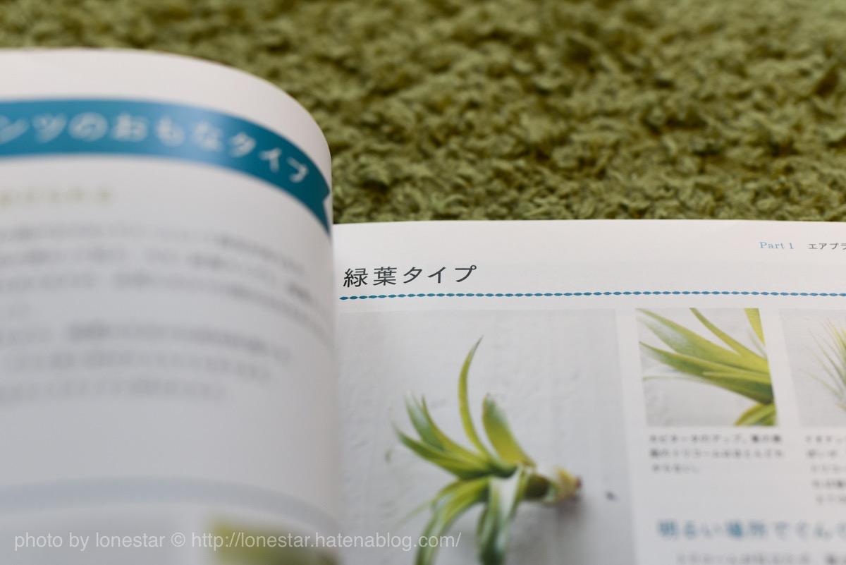 エアプランツ 緑葉タイプ