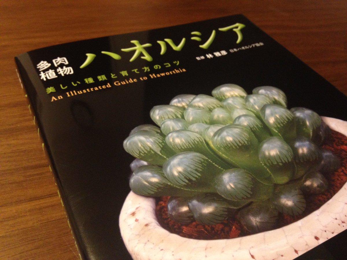 多肉植物ハオルシア 美しい種類と育て方のコツ