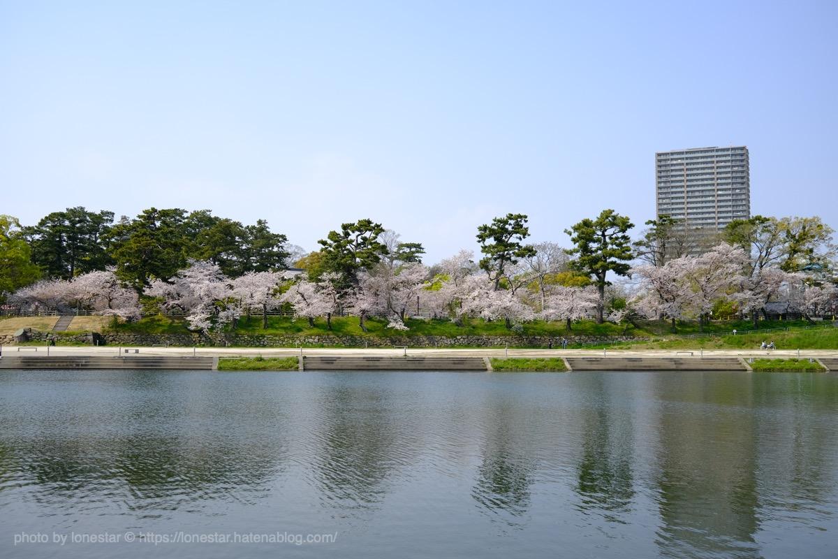 乙川 桜 2020年