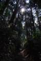 木漏れ日の山中
