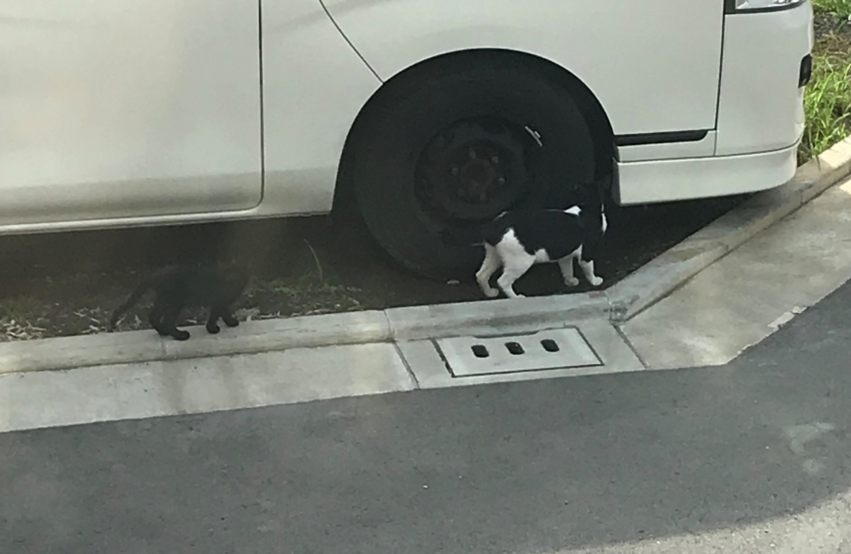 野良猫の親子 photo by LOVE YOURSELF