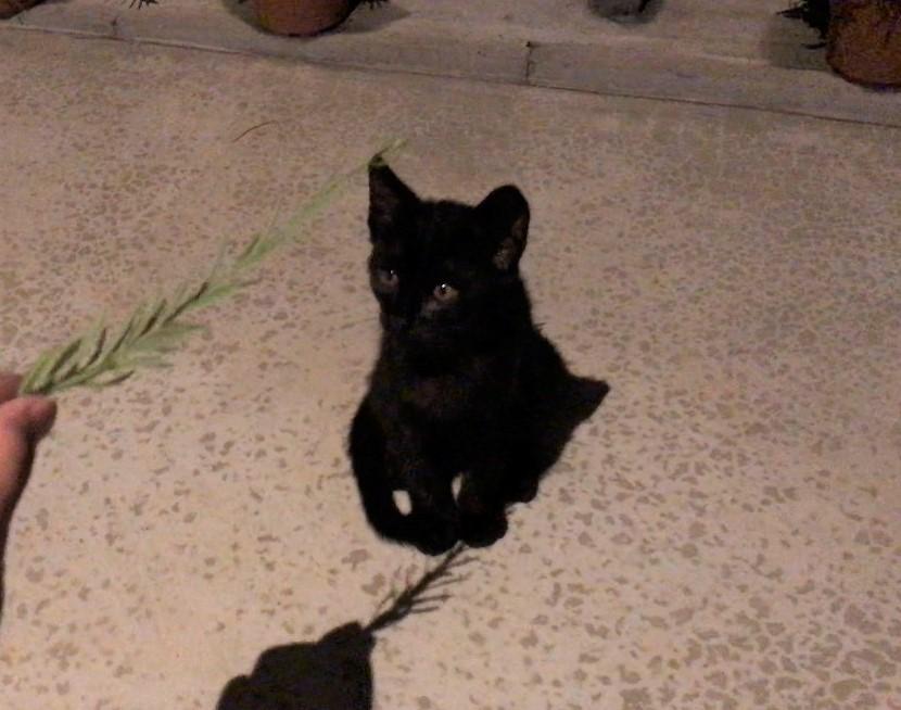野良の黒猫 photo by LOVEYOURSELF