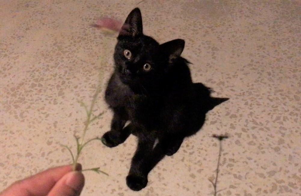 子猫(黒猫) photo by LOVE YOURSELF