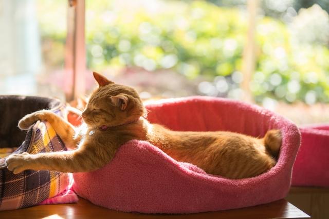 猫と猫ベッド photo by photo AC