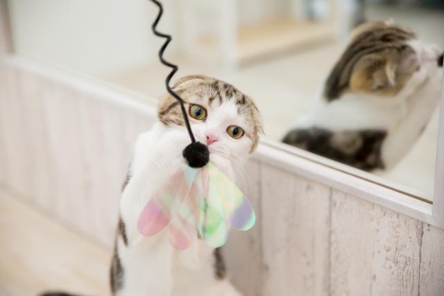 鏡の前で遊ぶ猫 photo by photo AC