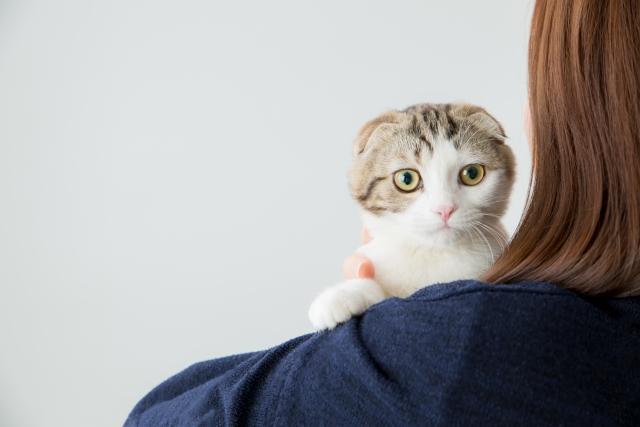 猫と人 photo by photo AC