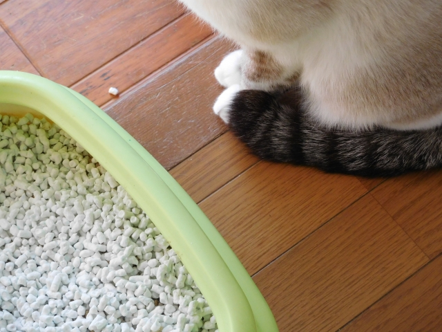 猫とトイレ photo by photoAC
