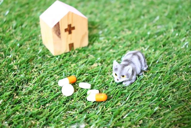 猫の病院 photo by photo AC