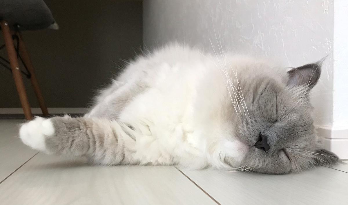 寝ているバロン photo by Shirahika