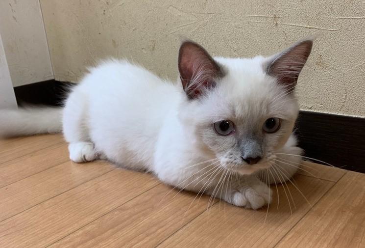 クッキーちゃん photo by 猫のすみかのブログ