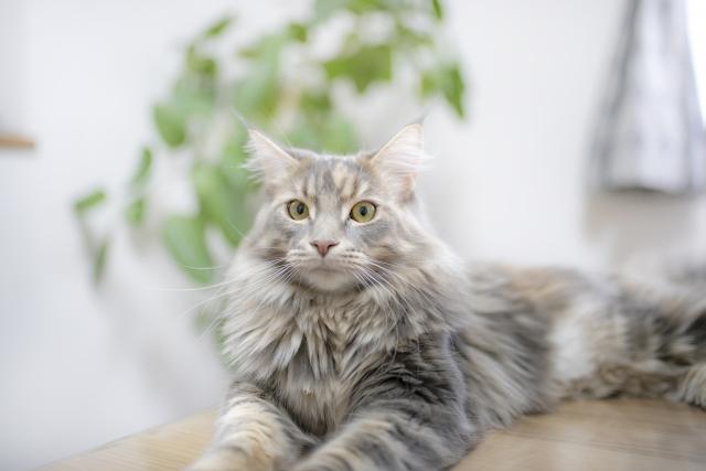くつろぐ猫Photo by photoAC