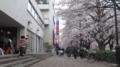 No.02 (国立市)雑貨屋George's前:北向き(2011/04/09撮影)