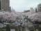 JR国立駅ホームから眺める国道沿いの桜並木(2011/04/09撮影)