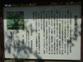 明治神宮外苑 世田谷草野球ロスヒターノス