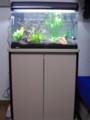 [熱帯魚]60cm水槽(仮)とキャビネット