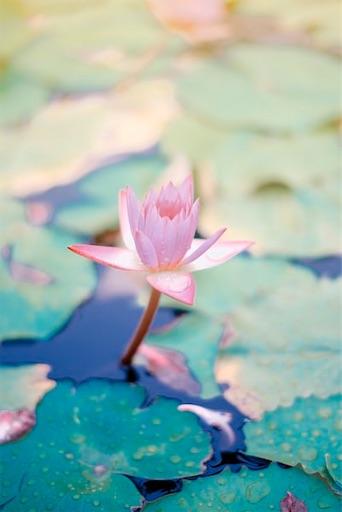 f:id:lotta-yoga:20200606015731j:image