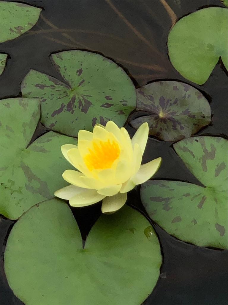 f:id:lotus-saiin:20191007123613j:image