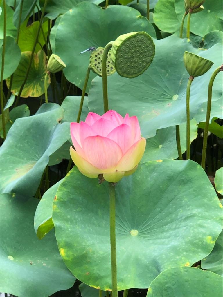 f:id:lotus-saiin:20200127004436j:image