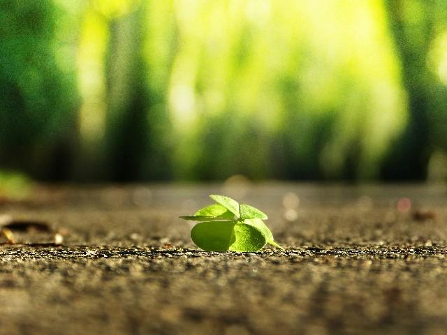 f:id:lotusflower-ako:20191213095619j:image