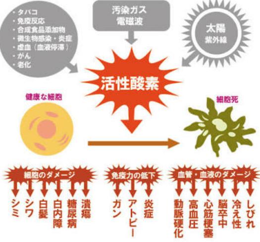 活性酵素のイメージ画