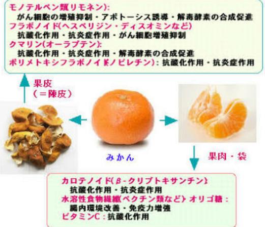 みかんの栄養素