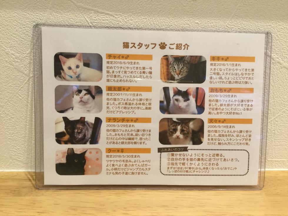 猫カフェのららの猫スタッフ紹介