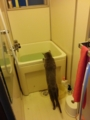 風呂に猫がいた