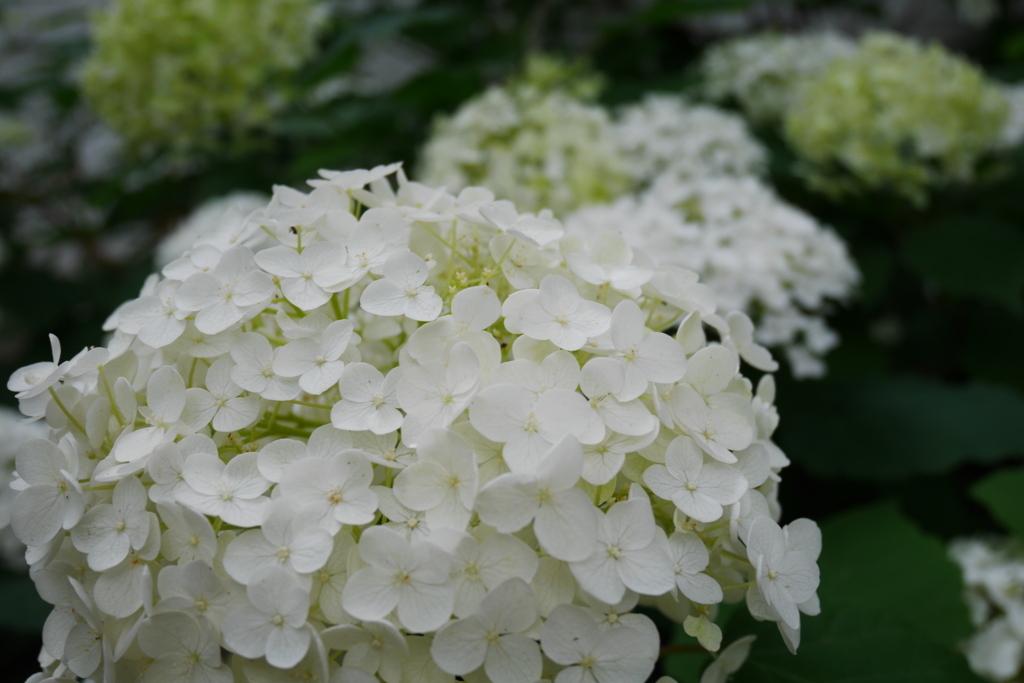 白い花もキレイです
