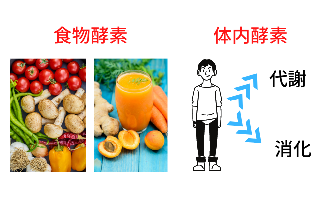 代謝を上げるには、食物酵素を摂取し、消化酵素を節約する