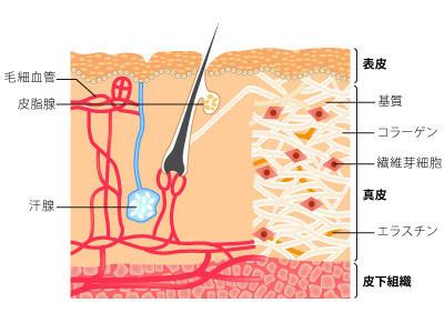 肌の代謝を上げる「酵素、ビタミンB群、ミネラル」を摂取できる