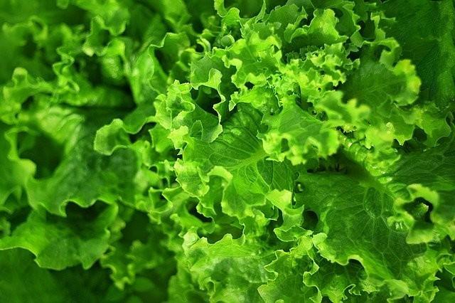 葉野菜から、肌細胞の材料となるアミノ酸を摂取できる