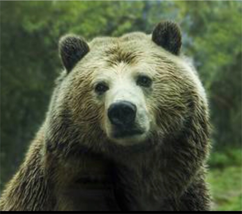 f:id:lovecapybara:20190327201130j:image