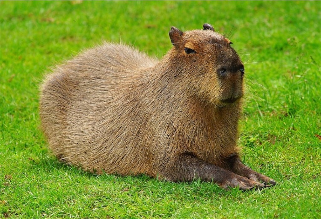 f:id:lovecapybara:20190725232550j:image