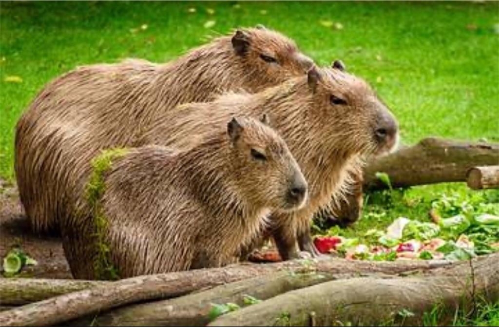 f:id:lovecapybara:20191016195602j:image