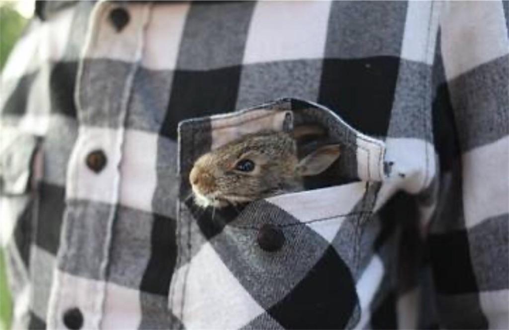 言う の なんて ネズミ は 英語 で