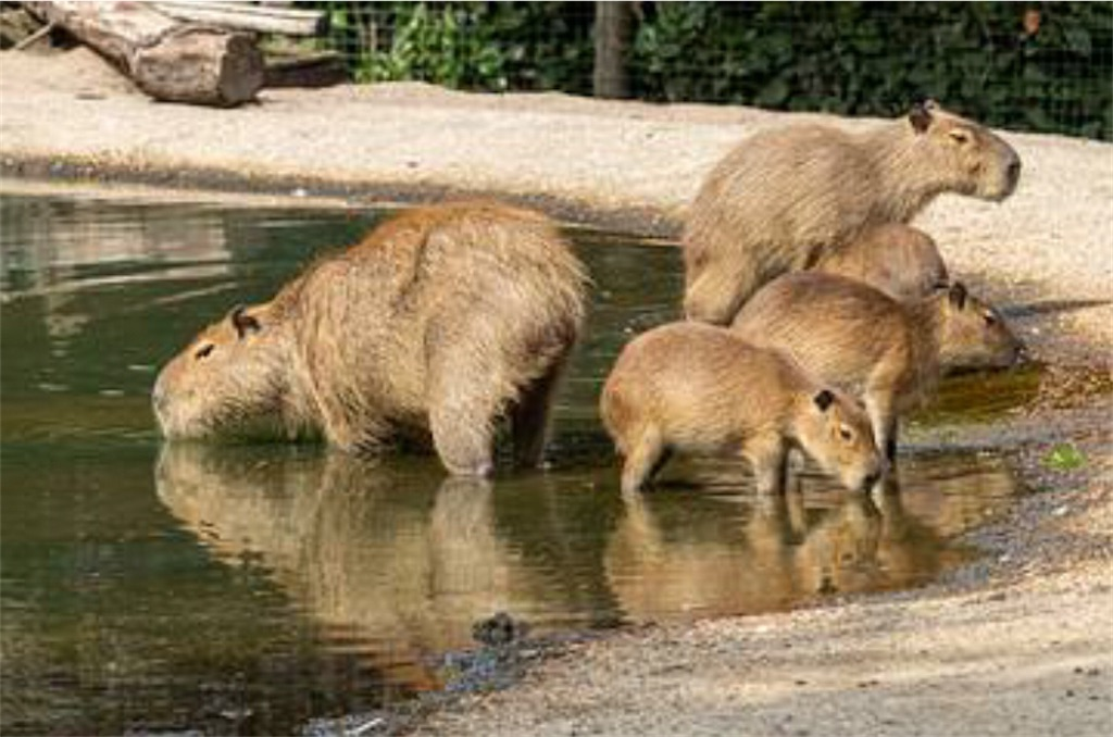f:id:lovecapybara:20210108115947j:image