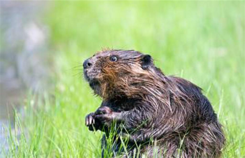 f:id:lovecapybara:20210307123622j:image