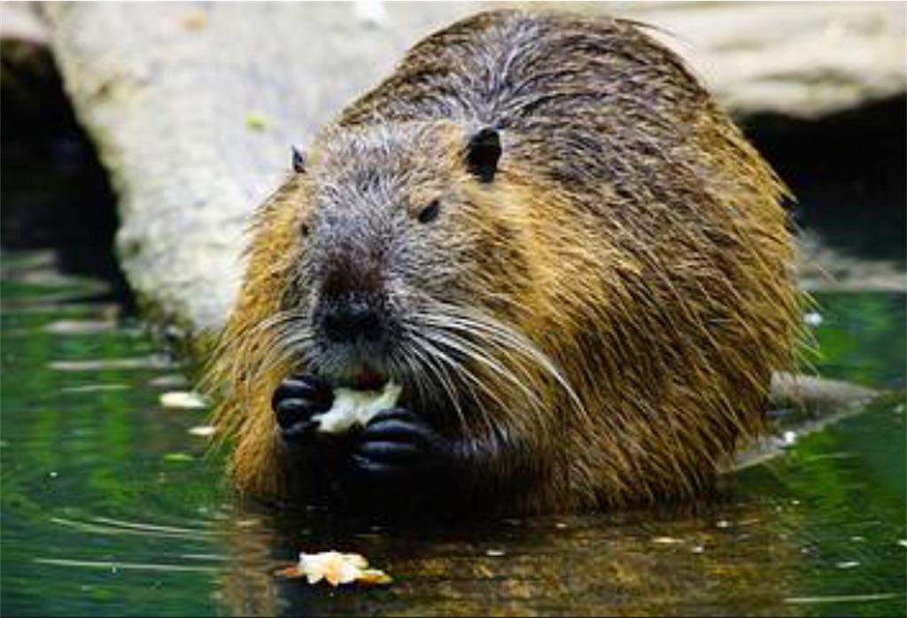 f:id:lovecapybara:20210307131813j:image