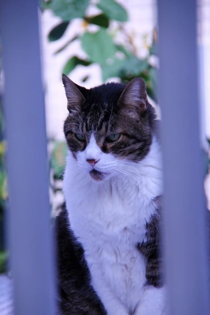 f:id:lovecats:20170717155317j:plain