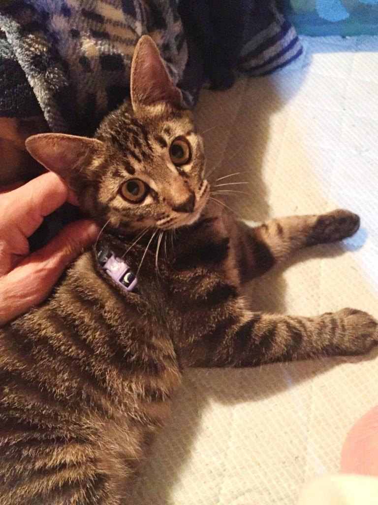 f:id:lovecats:20171124143104j:plain