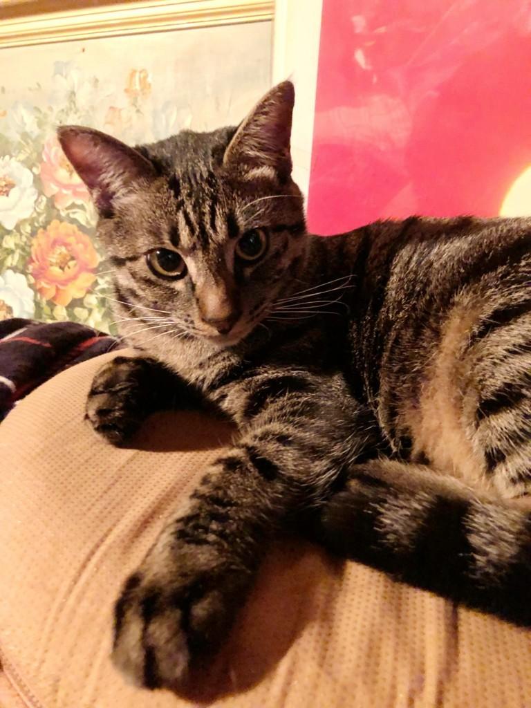 f:id:lovecats:20180218230952j:plain