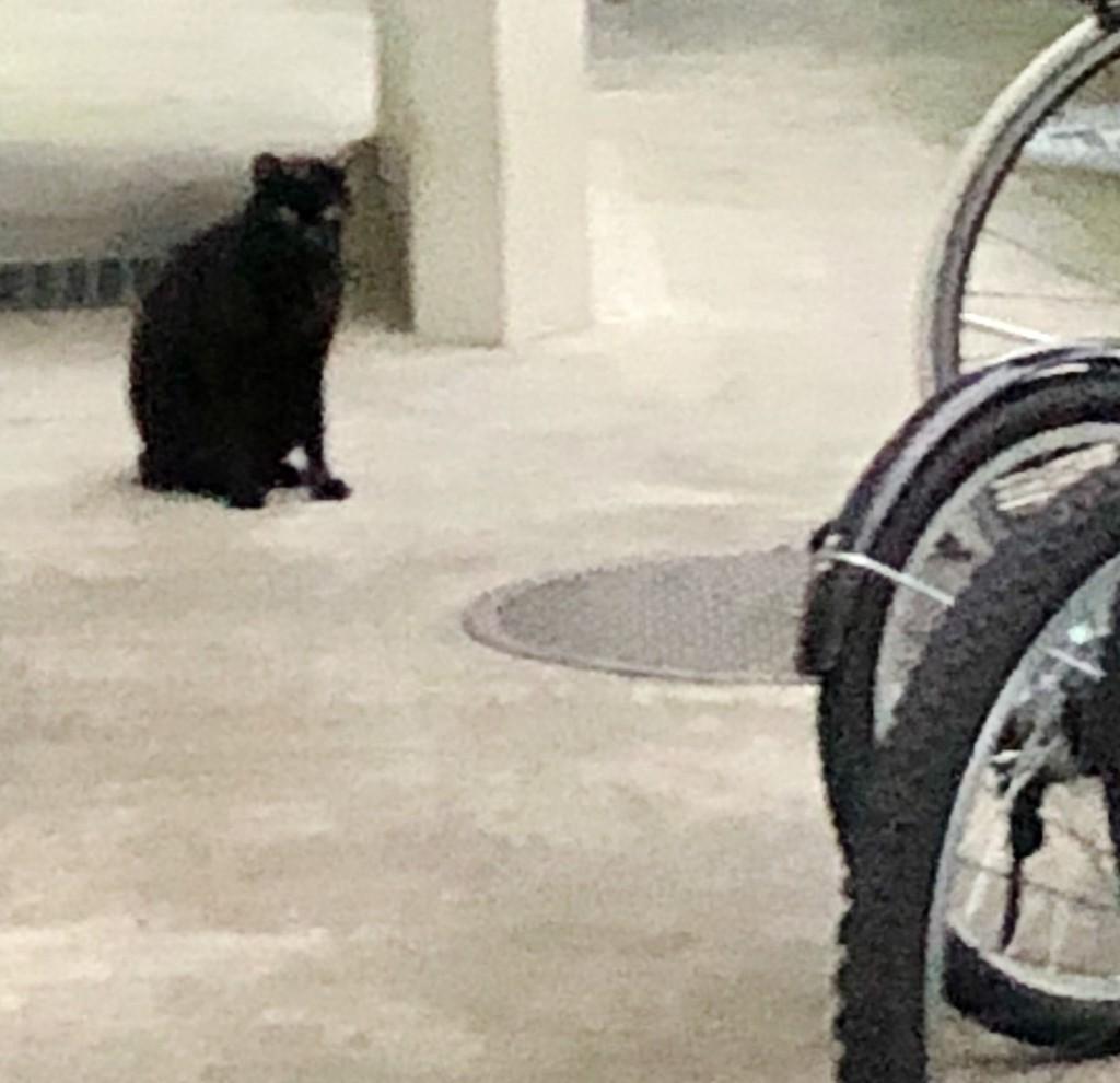 f:id:lovecats:20180620232524j:plain