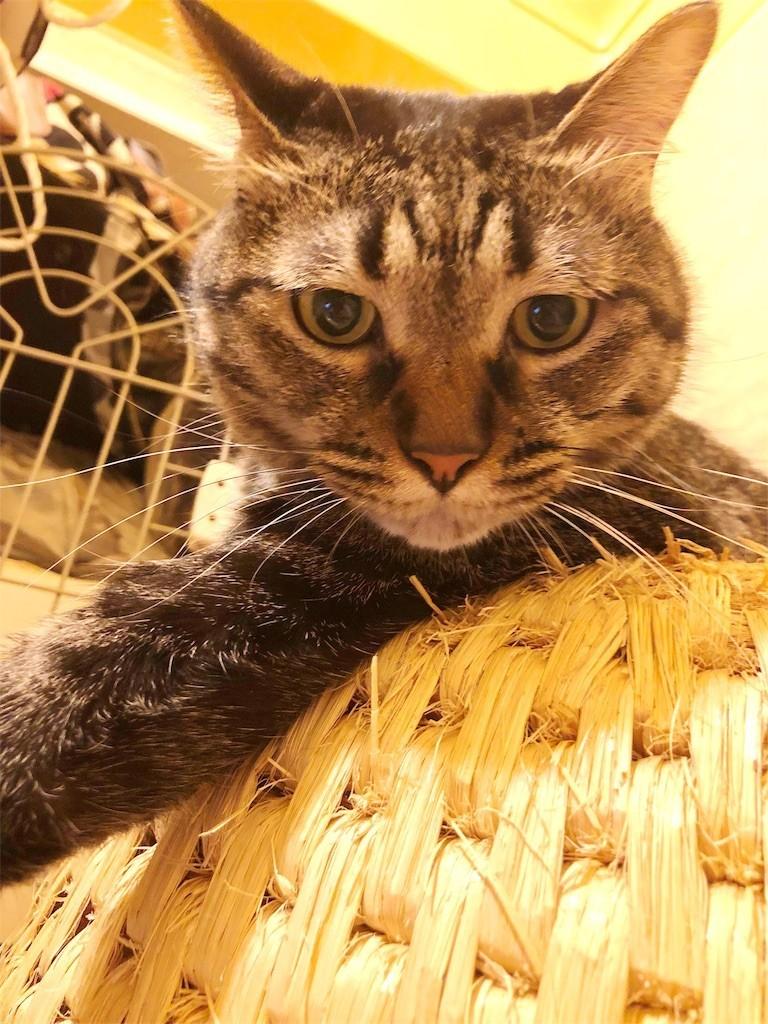 f:id:lovecats:20180707101534j:image