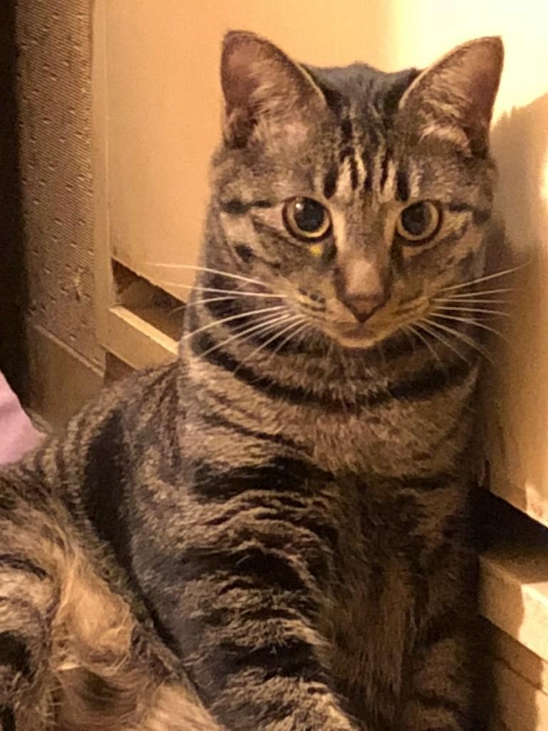 f:id:lovecats:20180909144524j:plain